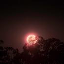 """Rising Moon between """"Sang dragon, narra"""",                                Ray Caro"""