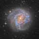 M83 Southern Pinwheel Galaxy,                                Jarrett Trezzo