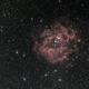 NGC 2238 - Rosetta Nebula,                                Thibaut B.
