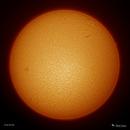 Sun - 3/4/2018,                    Damien Cannane