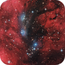 NGC6914 - CDK17 First Light,                                Michael & Jon Norman