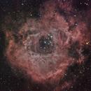 Rosette Nebula,                                Nathan Morgan (nm...