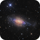 Flamboyant Flocculent galaxy - NGC 3521,                                Terry Robison