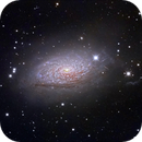 M 63 - Sunflower Galaxie,                                Stefan Schimpf