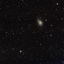 NGC 772 - Arp 78 and minor planets,                                Michael Lorenz
