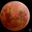 The Blood Moon,                                David