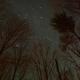 Pleiades & California Nebula Through The Trees,                                JDJ