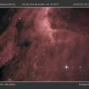 Pelican Nebula (IC 5070),                                Radek Kaczorek