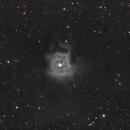 Iris Nebula NGC 7023 ,                                diurnal