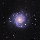 M74 the Phantom Galaxy,                                Seymore Stars