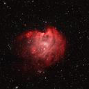 NGC 2174-The Monkey Head nebula in HOO palette,                                gibran85