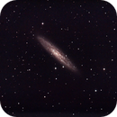 NGC253 - The Sculptor galaxy,                                Michel FLEUREAU
