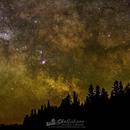 Milky Way Tree Line,                                Wesley Liikane