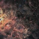 NGC 2070 Tarantula Nebula,                                Michel Lakos M.
