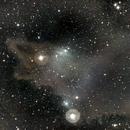LDN 1235 - The Shark Nebula,                                Timothy Martin & Nic Patridge
