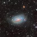 M63 - The Sunflower Galaxy,                                Tim Hutchison