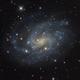 NGC 300 in Sculptor,                                Leslie Rose