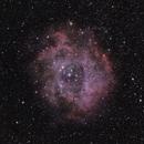 Rosette Nebula - NGC 2237,                                Jacopo Fallai