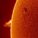 Solar prominences and a new sunspot,                                Robert Schumann