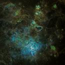 NGC 2070 Trantula Nebula,                                Mark Ellis