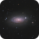 M63 - Sunflower Galaxy,                                Riccardo Balia