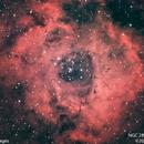 Rosette Nebula #2,                                Molly Wakeling