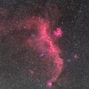 IC 2177 - The Seagull Nebula,                                Norris Coda
