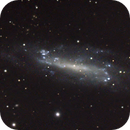 NGC 4236,                                Brian Ritchie