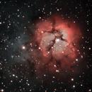 M20 Trifid Nebula,                                Ricardo Pereira