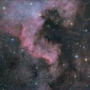 Cygnus Wall,                                Scotty Bishop