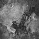 NGC 7000 -- The North America and Pelican Nebulae,                                Wayne Jaeschke
