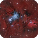 NGC 2264,                                Ralf Dienst
