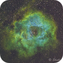 Rosette nebula in mapped colour,                                Shekhar Phatak
