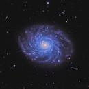 Many Eyelashes Galaxy - NGC 3486,                                sydney
