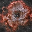 NGC2239 Rosette Nebula HARGB,                                Vincent