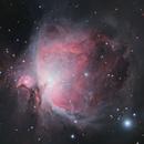 M42 - The Orion Nebula,                                Anurag Bhatt