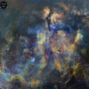 Cygnus Mosaic,                                Carastro