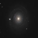 NGC 2985,                                Gary Imm