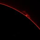 Sun, prominence, 19 Marzo 2020,                                Ennio Rainaldi