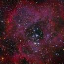 NGC 2244 - Rosette Nebula,                                André