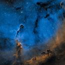 Elephant Trunk Nebula,                                hy