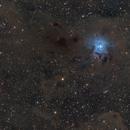Iris Nebula in Cepheus,                                Steve Milne
