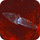 Squid Nebula,                                KNP