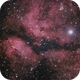 IC1318,                                Hon Yi