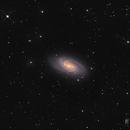 NGC 2903 Galaxy,                                Florian_Pieper