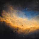 California Nebula Panoramic Mosaic (NGC 1499),                                Will Czaja