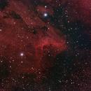 Pelican Nebula 102mm APO,                                Andrew Burwell