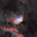 Tulip Nebula Region,                                Charles Bonafilia