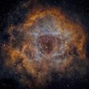 NGC 2237: Rosette Nebula,                                Michael Caligiuri