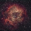 Rosettennebel und NGC 2244,                                Peter Schmitz